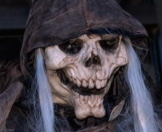 Halloween-2015-(202-of-241)