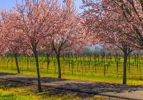 Napa-Spring-Day-174