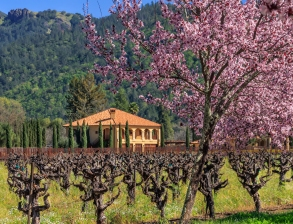 Napa-Spring-Day-(197-of-506)