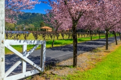 Napa-Spring-Day-214