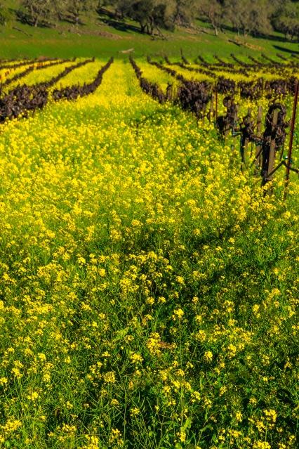 Napa-Spring-Day-472