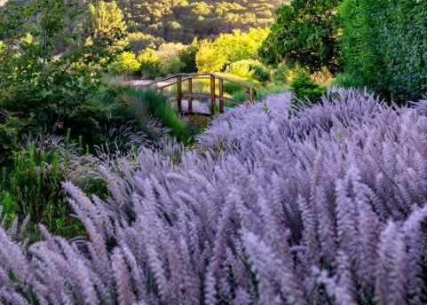 Lavender-(1-of-390)