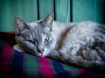 alices-cat