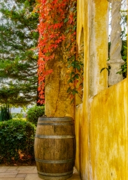 Barrel-at-Winery