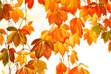 High-Key-Leaves