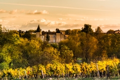 The Lafite Rothschild Vines in Front of the Chateau late Afernoon