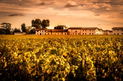 The vines and Chateau of Pontet Canet late in the afternoon